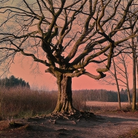 De Heksenboom in Mol